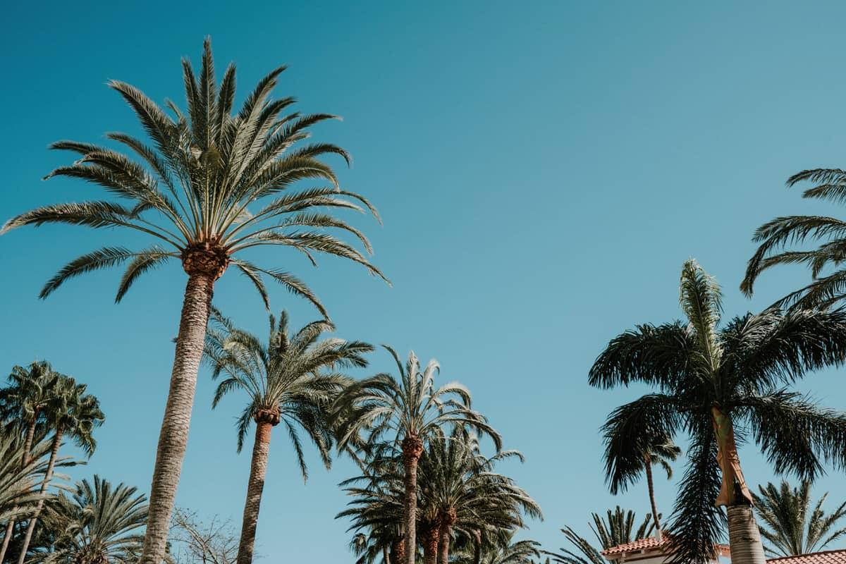 Hochzeit-Ausland-DJ-Mallorca